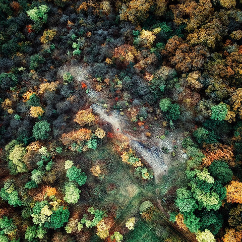 Aerial Forest Shot