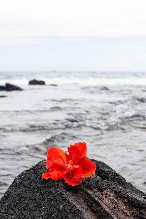 Hawai'i Bloom