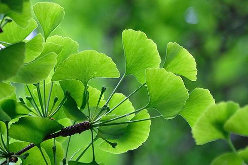 leaves tel-5258930_1920.jpg