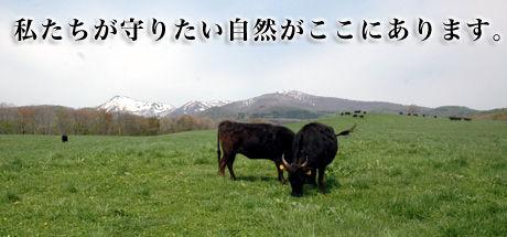 gaiyou001.jpg