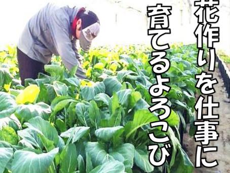 【園芸課】新規就農者募集