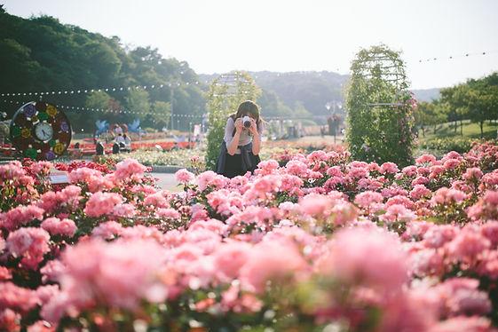 Çiçek Festivali