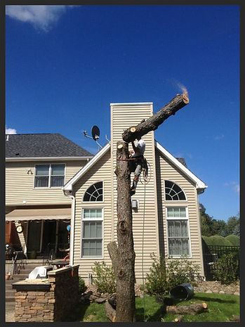 Tree Removal Buffalo, West Seneca, Hamburg, Orchard Park