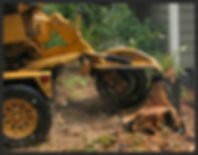 Tree removal buffalo, tree service buffalo, tree service hamburg, tree service orchard park, tree service west seneca, tree removal west seneca, stump remova orchard park, tree removal hamburg, stump grinding buffalo, stump grinding hamburg, stump grinding