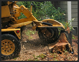 Stump Grinding Buffalo