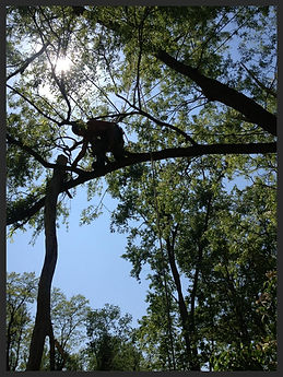 Tree Trimming Buffalo, Tree Pruning Buffalo