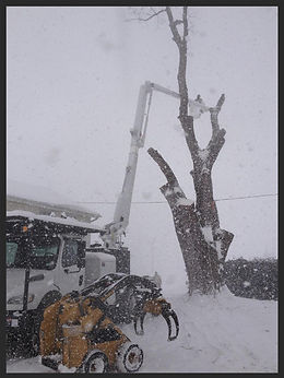 Tree Removal Buffalo