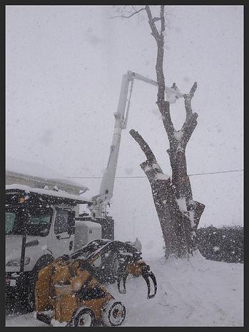 Tree removal buffalo, tree service buffalo, tree service hamburg, tree service orchard park, tree service west seneca, tree removal west seneca, tree removal orchard park, tree removal hamburg, stump grinding buffalo, stump grinding hamburg, stump grinding