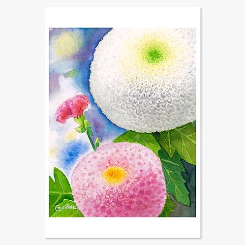 「ポンポン菊とカーネーション」ポストカード