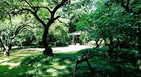 自然(公園の中の森)