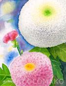 ポンポン菊とカーネーション.jpg