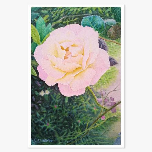 「庭先のバラ」ポストカード
