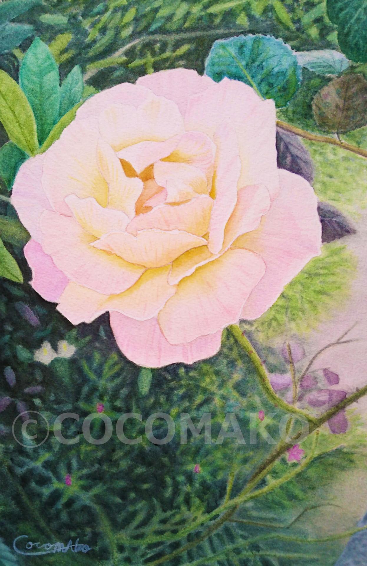 庭先のバラ.jpg