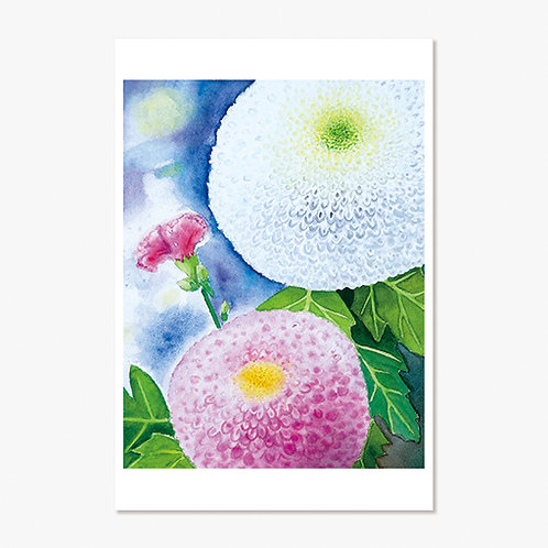 """Pom-pom Mums and a Carnation"" Post Card"