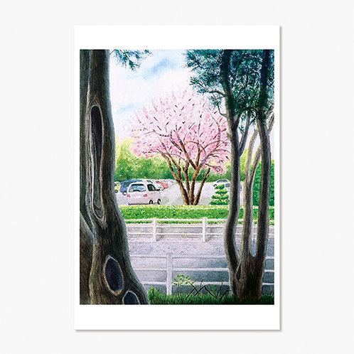 """""""In a Corner of a Park"""" Post Card"""