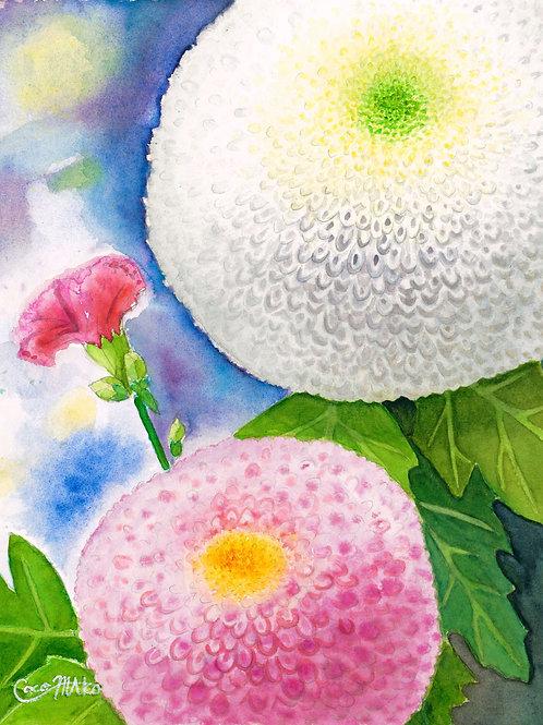 「ポンポン菊とカーネーション」PC用壁紙