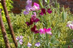 Beautiful flowers at Hampton Court