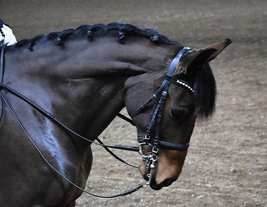 head english horse DSC_1552.jpg