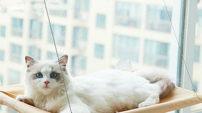 Cat Resting Bed  Window