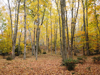 Charlevoix Fall Colors