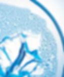 Closeup of a Petri Dish