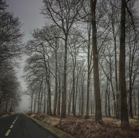 Forêt Domaniale de Vierzon