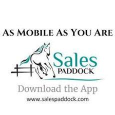 sales paddock app.jpg