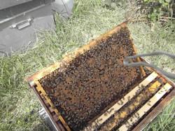population de nos ruches