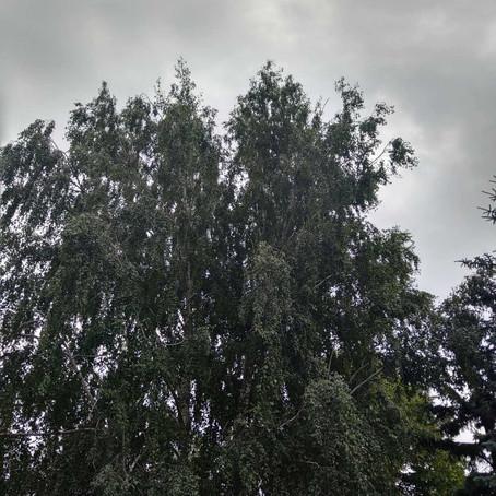 Дождливое лето.