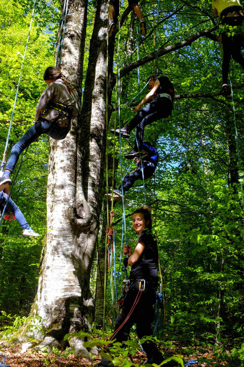 hetre en forez grimpe d'arbre p8.JPG