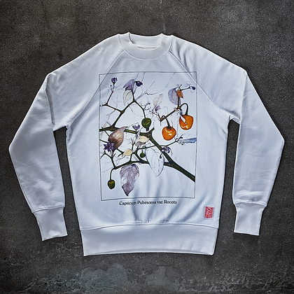 Sweater (Rocoto)