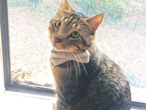 Escaped apartment cat lost 14 days is found!