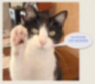 GPS collar for cats.jpg