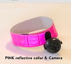Pink cat collar and camera.jpg