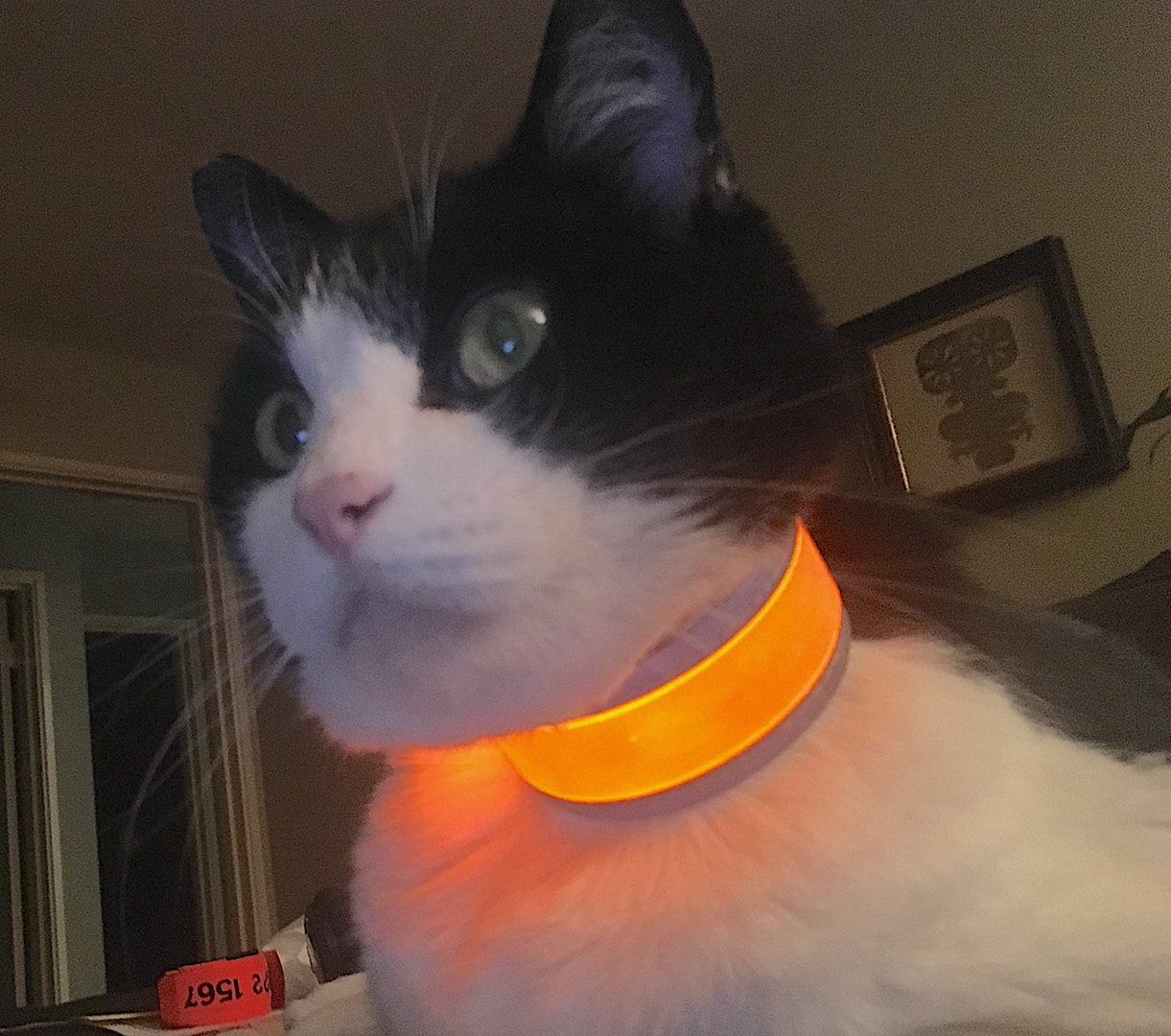 Glow track cat collar.png