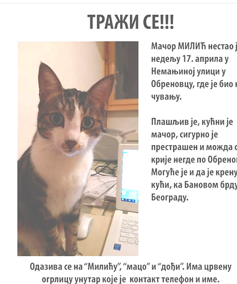 Found cat serbia.png