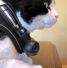 Cat harness camera Rabbitgoo style.JPG
