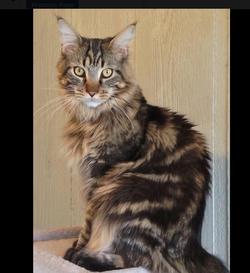 Lost cat found! Jones is home!