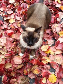 Oliver Ontario cat FOUND pic.jpg