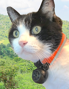WEARABLE_CAT_COLLAR_CAMERA-rafrica.png