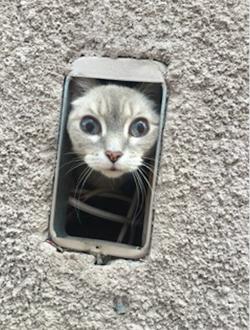 Lost kitten found in wall Nevada