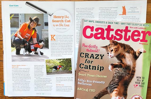 Lost cat finder in Catster pet detective