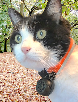 WEARABLE_CAT_COLLAR_CAMERA-park leaves.p