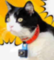 a cat with a Camera is on the loose.jpg