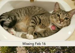 Hermosa Beach CA lost cat found