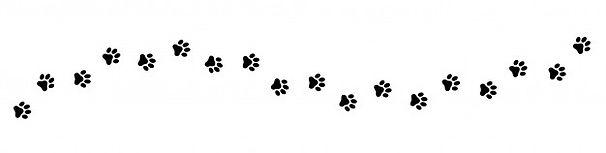 paw-print-cat-dog-puppy-pet-trace_177006