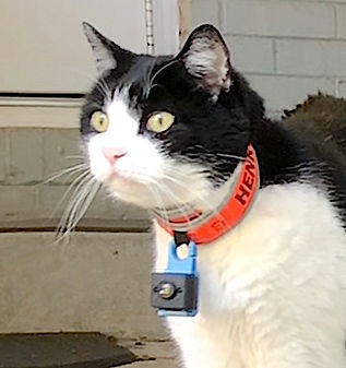 Glow track cat tracking collar pic.jpg