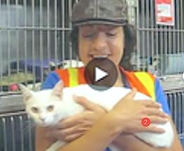 Lost cat finder pet detective.png