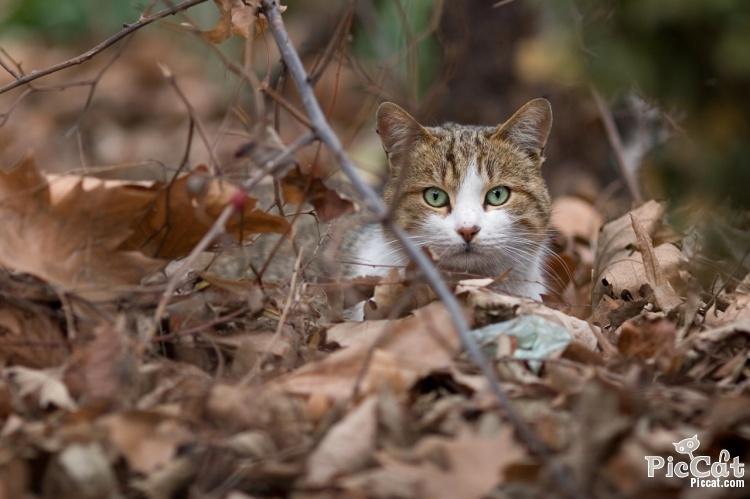 Lost cat Austin TX.jpg