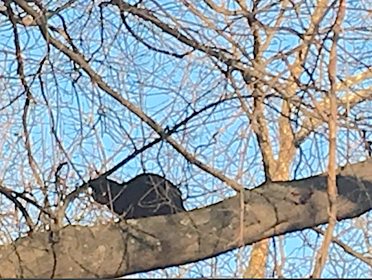 Lost cat found in tree